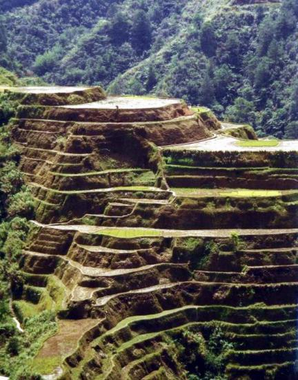 Mt. Banaue Rice Terraces