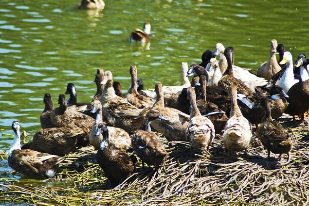 Candaba Philippines  city photo : See the Candaba Bird Sanctuary in Pampanga | Travel to the Philippines
