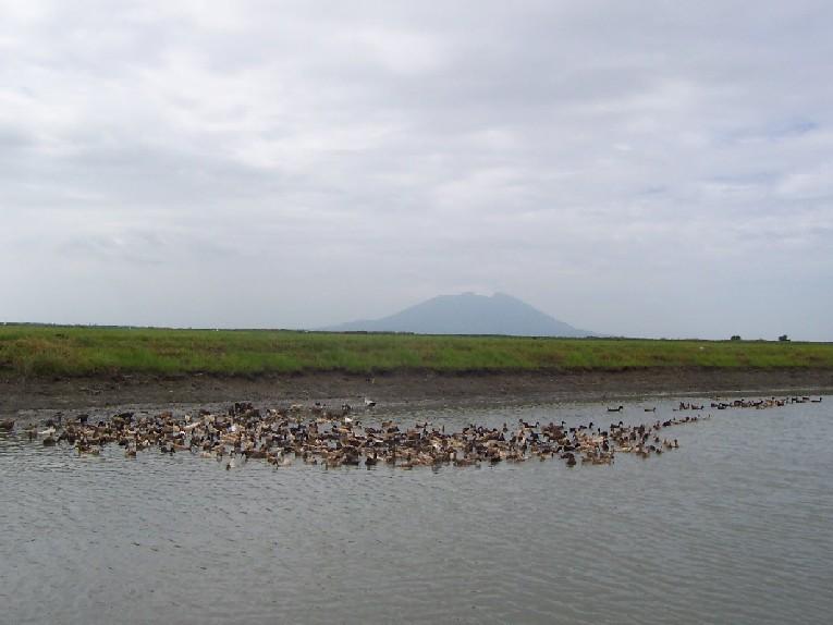 Candaba Swamp & Bird Sanctuary
