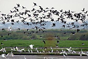 candaba swamps