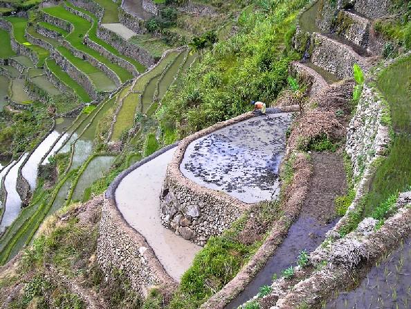 Ifugao Banaue Rice Terraces