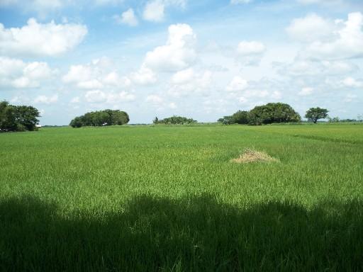 Nueva Ecija farm