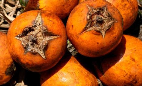 Apayao Fruits
