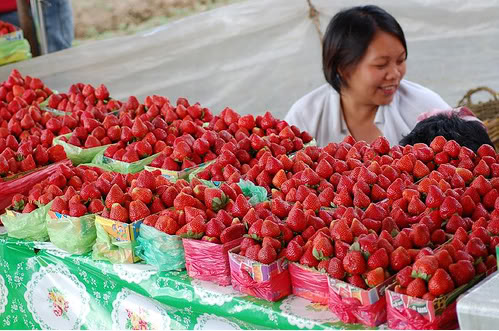 Benguet - Strawberries