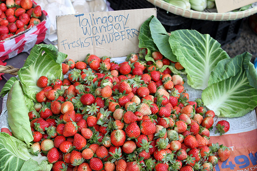 Fresh strawberries at La Trinidad, Benguet