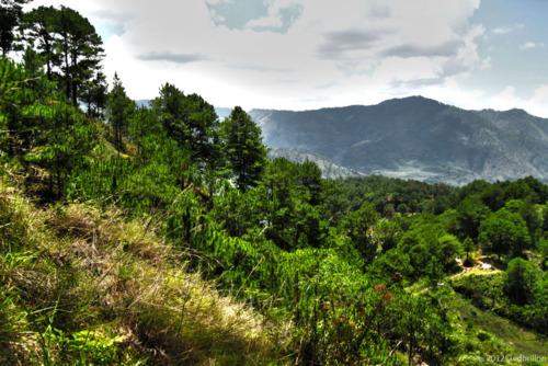 Benguet forest