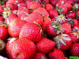 strawberry benguet