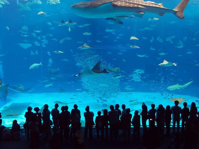 manilaoceanpark