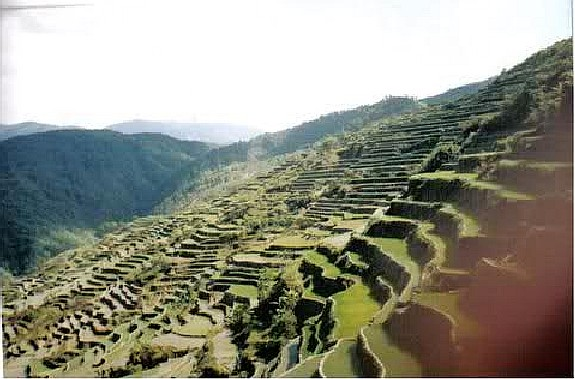Focong Rice Terraces