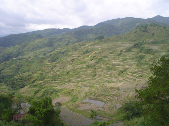 Sadanga Rice Terraces