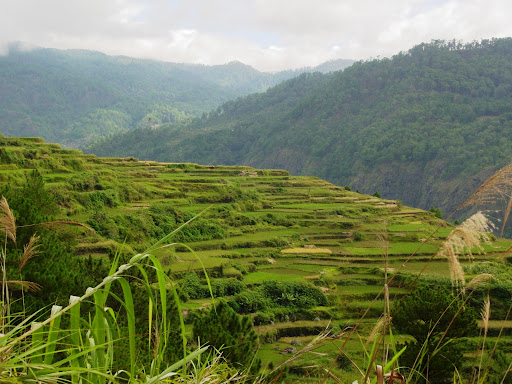 Tanulong Rice Terraces