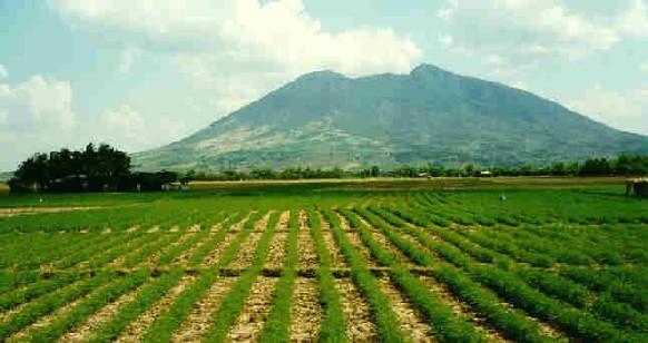 Pampanga farms