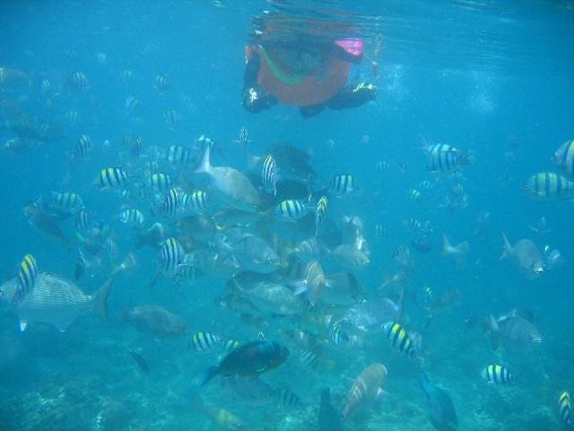 Snorkeling Batangas