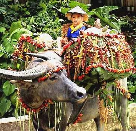 Bulacan pulilan carabao festival travel to the philippines