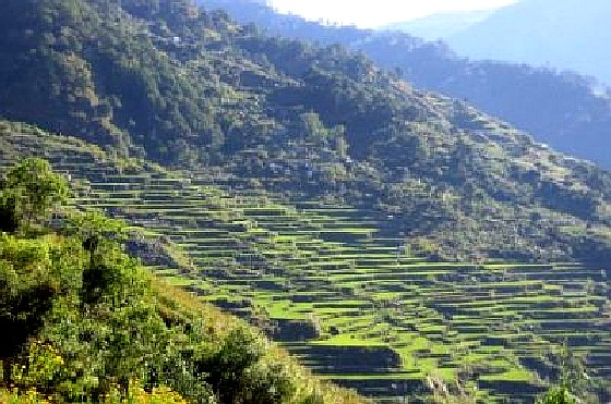 Benguet Palina Rice Terraces