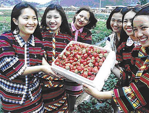 Benguet - Strawberry Festival