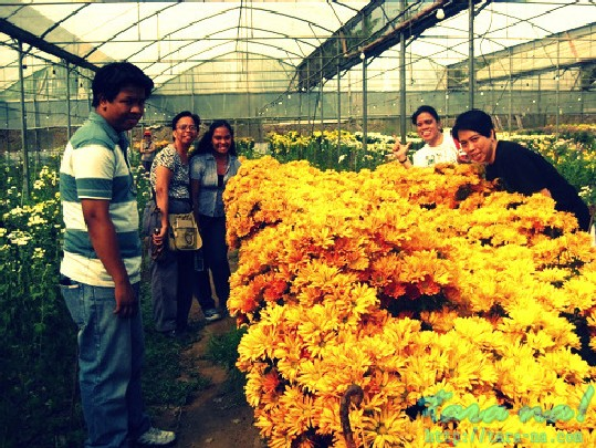tagaytay flower farm