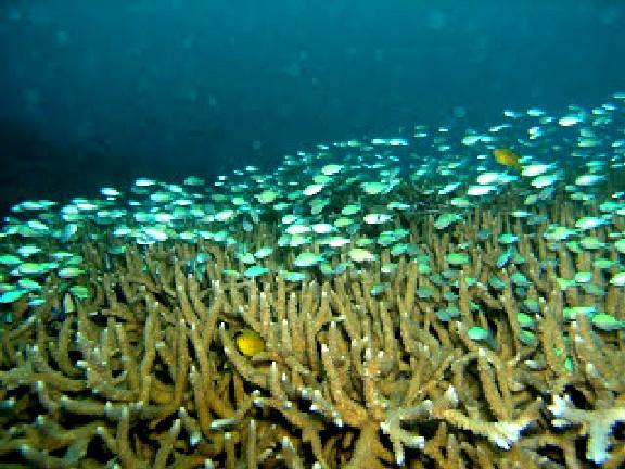 Aurora Scuba Diving