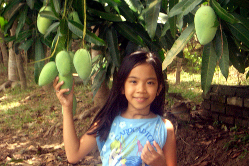 Zambales Mangoes