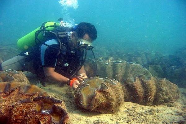 pangasinan scuba diving