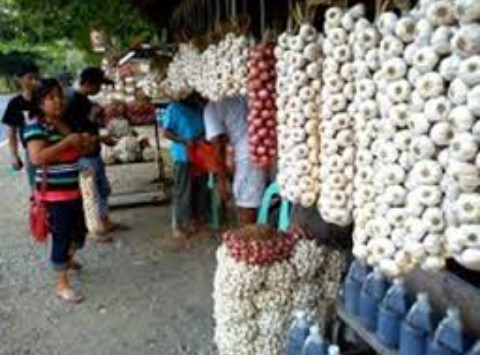 Ilocos Sur Sinait Garlic Festival3